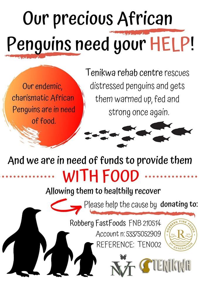 donate Tenikwa rehab penguin rehabilitation