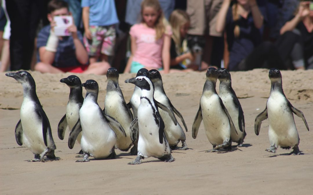 Our precious African penguins need your help